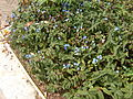 Plant.6379.JPG