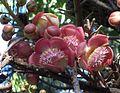 Plant 9 Cairns.jpg