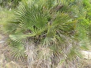 Planta típica.JPG