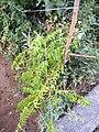 Plants in Sector 28 Faridabad 5.jpg
