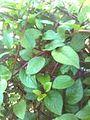 Plants of India 1.jpg