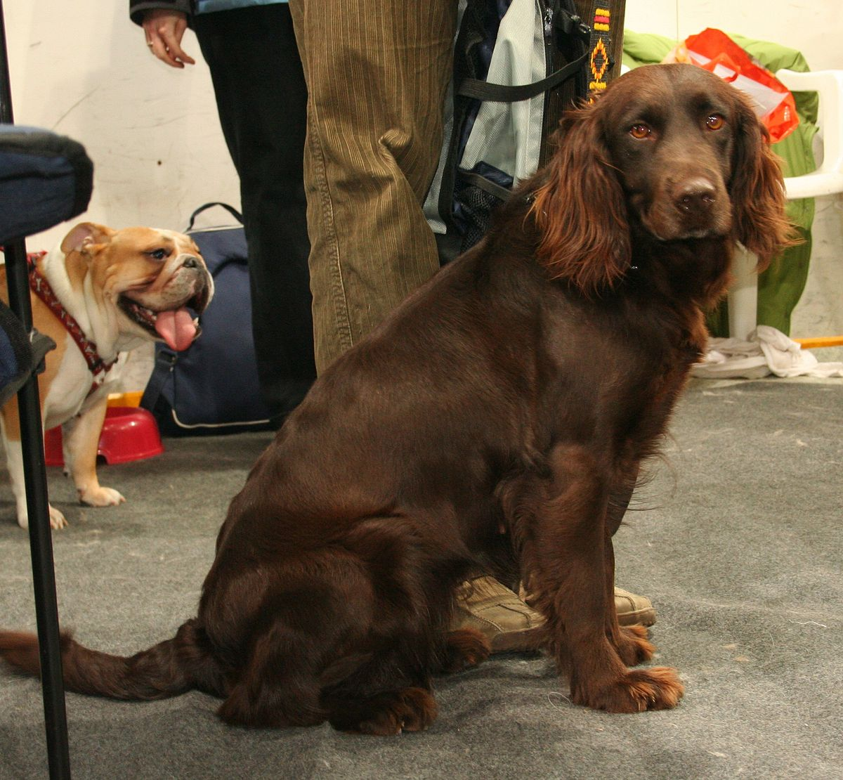 Image Result For What Weight Dog