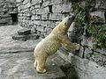 Polar bear Buffalo Zoo.JPG