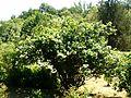 Poltava Botanical garden (126).jpg