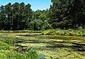 Pond scum (28534261285).jpg