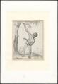 Pongo - 1737-1812 - Print - Iconographia Zoologica - Special Collections University of Amsterdam - UBA01 IZA1000170.tif