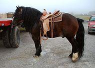 Posavec horse Sentrupert dec 26 2009.jpg