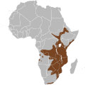Potamochoerus larvatus map.svg