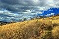 Prairie Grass Trail (8) (15452560850).jpg
