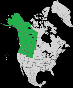Present canis lupus occidentalis range.png