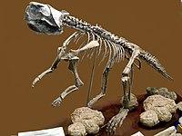 Psittacosaurus2.jpg