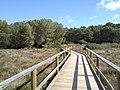 Puente acceso.jpg