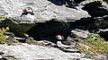 Puffins at Skellig Michael 11.jpg