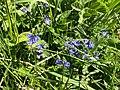 Purple flowers 13 53 29 074000.jpeg