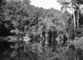 Queensland State Archives 1218 Crystal Pool Freshwater Valley Cairns District c 1935.png