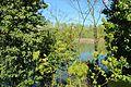 Réserve naturelle régionale du bassin de la Bièvre le 18 avril 2016 - 46.jpg