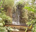 Rain forest2 BZ ies.jpg