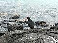 Rangitoto Island - panoramio.jpg