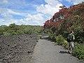 Rangitoto Trail (8469792559).jpg