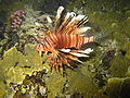 Red sea-reef 3414.jpg