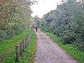 Reit- und Radweg an der Ostsee zwischen Heiligendamm und Kühlungsborn - panoramio.jpg