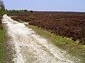 Rievaulx Moor - geograph.org.uk - 171992.jpg