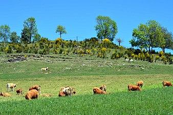 Ripolles Girona 02.jpg