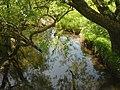 River Lyubushka2.JPG