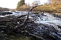 River Tees. Near Low Force - geograph.org.uk - 1104456.jpg