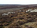 Rocks on Candlerush Moor - geograph.org.uk - 398690.jpg