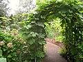 Rodef Shalom Biblical Botanical Garden - IMG 1323.JPG
