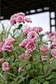 Rose, Anneke Doorenbos, バラ, アンネケ ドーレンボス, (13023635833).jpg