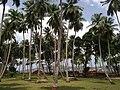 Ross Island Trees - panoramio.jpg
