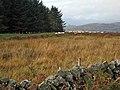 Rough grazing at Todstone in the Glenkens - geograph.org.uk - 267149.jpg