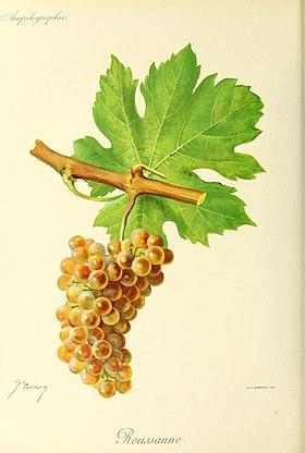 Roussanne wikip dia for Taille des abricotiers bergeron