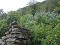 Ruins and flowers 2.JPG