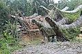 Rumah Adat Tongkonan (Toraja) 2.jpg