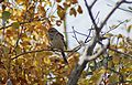 SK-AS-Bird.jpg