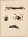 SLNSW 797151 f 11 Insects of New South Wales.jpg