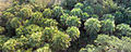 Sabal-Palm-forest.jpg