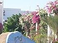 Safaga - panoramio (3).jpg
