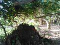 Sakhibata Temple campus kendrapara.JPG