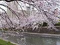 Sakurabashidori, Toyama, Toyama Prefecture 930-0004, Japan - panoramio (8).jpg