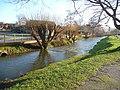 Salisbury - River Avon - geograph.org.uk - 1717333.jpg