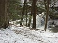 Salt Springs State Park (3283875323).jpg