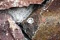 Salticus Scenicus? (5512745967).jpg