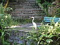 San Juan Botanical Garden - DSC07023.JPG