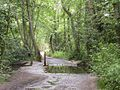 Sandy Lane - geograph.org.uk - 17361.jpg