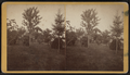 Savin Rock, from Robert N. Dennis collection of stereoscopic views.png