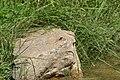 Schlangen - 2015-08-29 - LIP-057 Senne nördlich Oesterholz (31).jpg